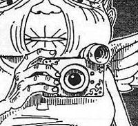 Dials - Coquillage du Monde Dial06
