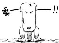 """Résultat de recherche d'images pour """"le chien one piece"""""""